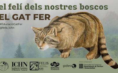 Tret de sortida al Projecte educatiu: El gat fer, el felí dels nostres boscos